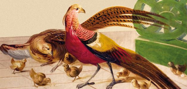 Niavarani - Der frühe Wurm hat einen Vogel