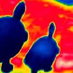 Xtremes Naturhistorisches Museum Schildkröten