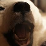 Norwegen Eisbär