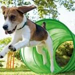 Hunde-Parkour T6628401M3V07