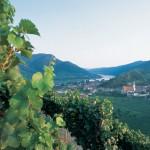 Weinrieden, Blick auf Spitz an der Donau,©Niederösterreich-Werbung/Cathrine Stukhard