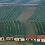 Kellergasse im Weinviertel Copyright Niederösterreich-Werbung/Rita Newman